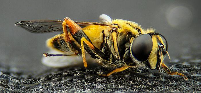 Kako analitika može sprečiti opadanje populacije pčela